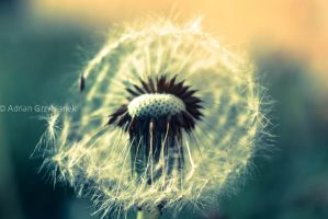 Make a wish 2 by AdrianGPhotography