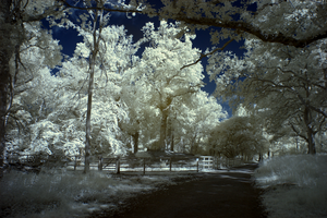 Ashridge in Infrared 2 by bmh1