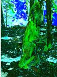 Dead tree Stump. Recolored by TheEpicHobbittron