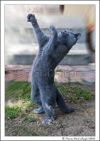 Dancing Bear Cat by substar