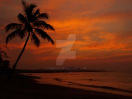red sky palm tree by gradge