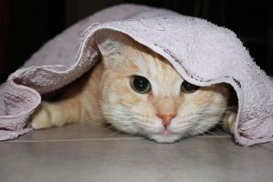 Playing and Hiding into Towel by Rea-the-squirrel