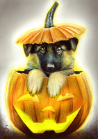 Halloween Special German Shepherd in a Pumpkin by Yankeestyle94