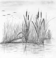 reeds at the lake by MChChovanec