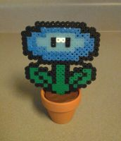 Potted Iceflower by Artymesia