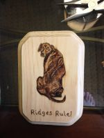 Ridges Rule by H20dog
