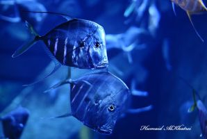 Blue Fish by aLdEeb