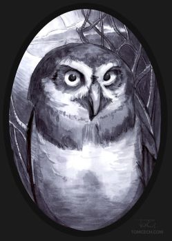 Owl by tomcech