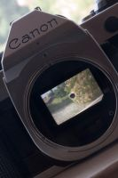 Viewfinder by FellowPhotographer