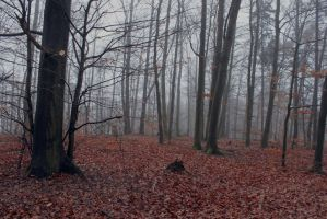 Foggy Forest 07 by sacral-stock