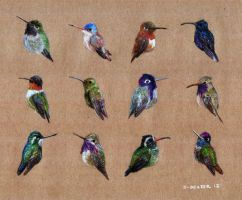 Birds: Hummingbirds by qmewlonimbus