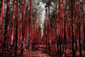 Blood Forest by GranasNorway
