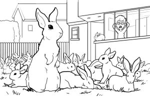 many rabbits... by shtibel