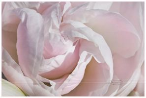 Soft Pastels by Nameda
