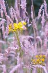 Yellow flowers stock 2 by Quinnphotostock