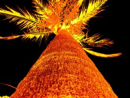 yellow palm by millhouse12