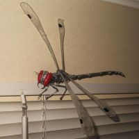 DRAGONFLY in wire by TheWallProducciones