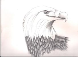 An Eagle by LilachSigal