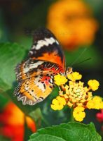 The Butterfly Named George by Tuesdaysangel