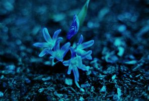 March Morning Bulb by rohwer