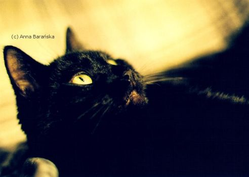 Yellow eyes by AvaInferi