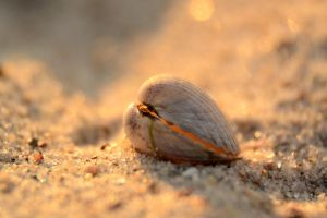 Shell by ThereseBorg
