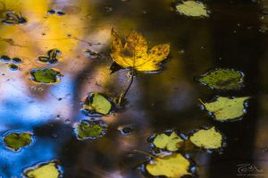 Autumn leaves @ acasa by Pod-Photography