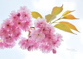 Spring in pink by marialivia16