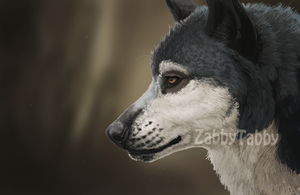 Simeon the Wolf by ZabbyTabby