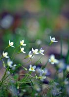 Flowers at Noon by GrimFay