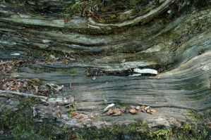 rotting wood_004 by BlokkStox