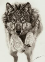 Jumping Wolf by AmBr0