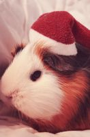 Merry Xmas! by Guineapigrage