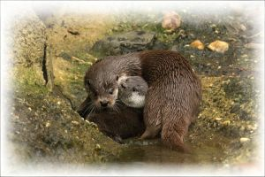 otter  maternity by greatbelow2