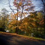 Fall Colors 08 by JER0ME-B
