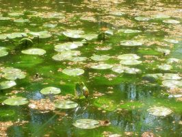 Spring Lily Pads by grizzy898