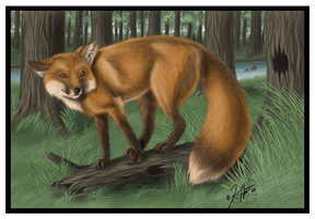 -Red Fox- by Krissyfawx