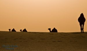Silhouetted Camels by amai911