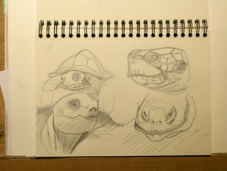 Doodles Studies Sketches11 - Turtle - Tortoise by CiNiTriQs
