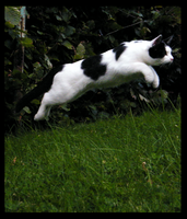 Leap by PERNicious-1