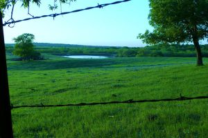 Barbwire Field by MousieDoodles