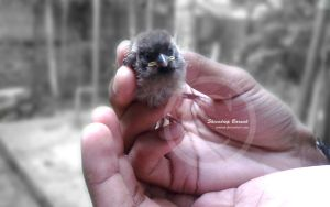 Baby Sparrow 2 by CypherVisor