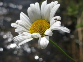 White Flower by Mayolijntje