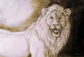 white lion - sketch on field by Bisanti