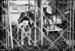 Animal Shelter .02 by FideNullo
