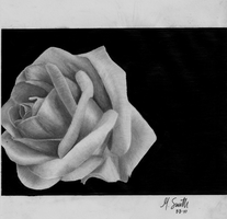 Rose by dizdrawspictures