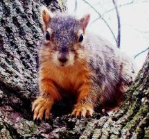 My first picture of a squirrel by insignificantartist