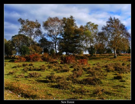 New Forest by mattsteele17