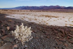 Desert Holly and Salt Flats by Elijah-Snow