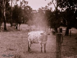 Thermal cow by shok75
